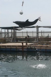 dolphin lodge serangan 1
