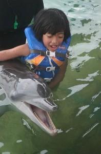 dolphin lodge serangan