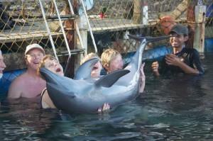 dolphin lodge serangan 6