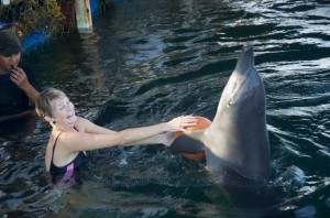 dolphin lodge serangan 7